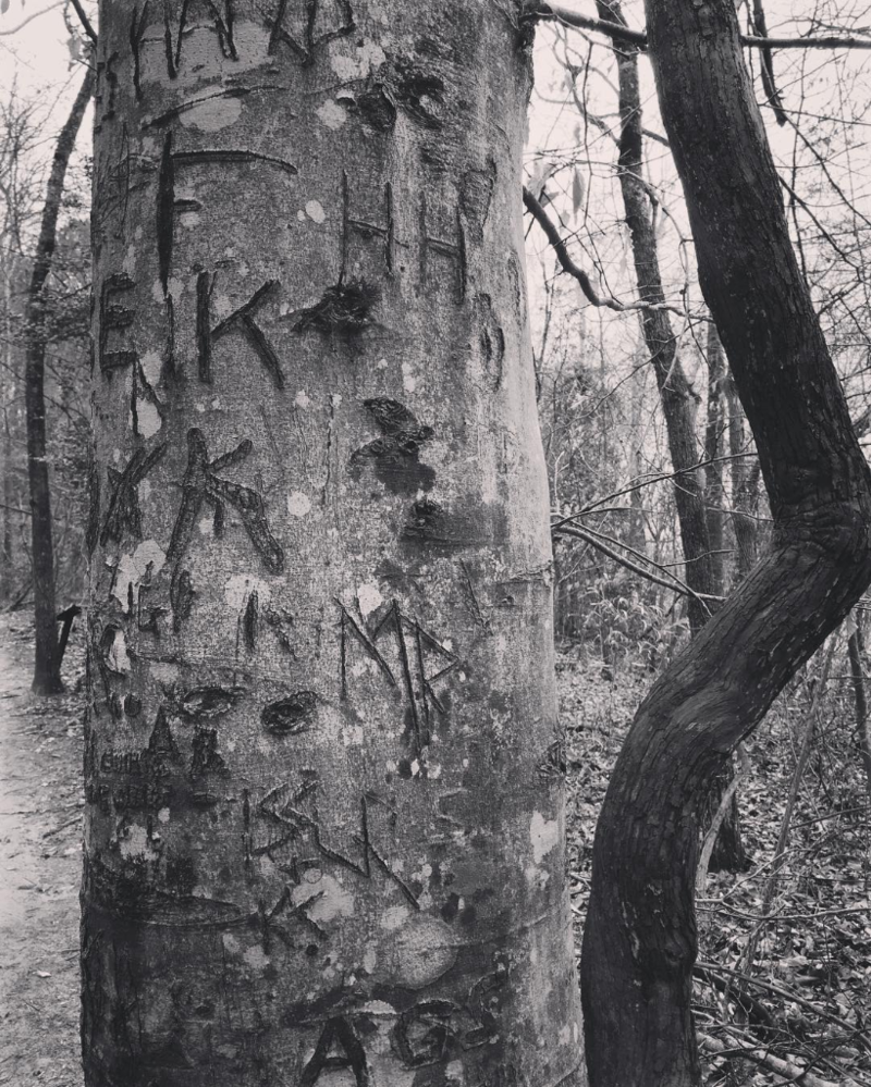 On the way back down the trail we encountered this tree of carved initials